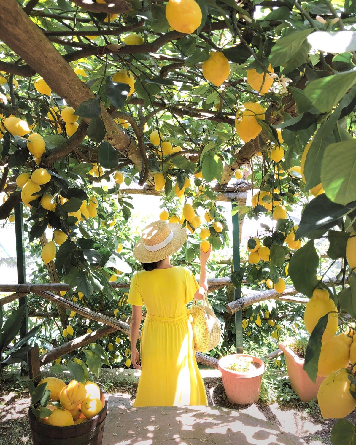 amalfi coast lemon grove farm tour